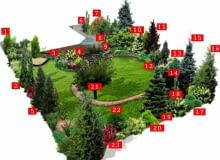 Plan ogrodu na planie okręgu: 1. żywotnik zachodni 2.świerk serbski 'Pendula' 3.hortensja bukietowa 'Kyushu' 4.hortensja bukietowa 'Tardiva' 5.daglezja zielona 6.cyprysik 'Dart's Blue Ribbon' 7.klon 'Dissectum' 8.wiśnia domowa 9. tawuła 'Goldmound', ligustr 'Vicaryi', jeżówka purpurowa, jałowiec 'Bue Star' 10.magnolia 'Susan' 11.świerk orientalny 'Aureospicata' 12.irga 'Eichholz 13.perukowiec podolski 'Royal Purple' 14.świerk serbski 'Nana' 15.świerk kłujący 'Glauca' 16.choina kanadyjska 17.ligustr okrągłolistny 'Vicaryi' 18.wiśnia 'Amanogawa' 19.jodła kaukaska 20.cyprysik 'Filifera', pęcherznica 'Luteus' 21.jabłoń domowa 22.dereń jadalny 23.berberys Thunberga 'Erecta'