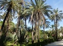 Sycylia. W miejskim parku można się poczuć jak na egzotycznej wyspie w palmowym gaju.