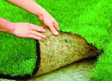 Korzenie darni na folii tworzą gęstą masę. Dzięki temu łatwo je oddzielić bez uszkodzenia od nieprzepuszczalnego podłoża.