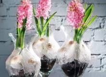 Wiosenna kompozycja w szklanym naczyniu z hiacyntami