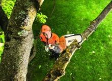 Podkrzesywarka spalinowam cicha i wydajna, do pielęgnacji drzew z poziomu ziemi do wysokości 5m, Stihl/Fot.: mat. pras.