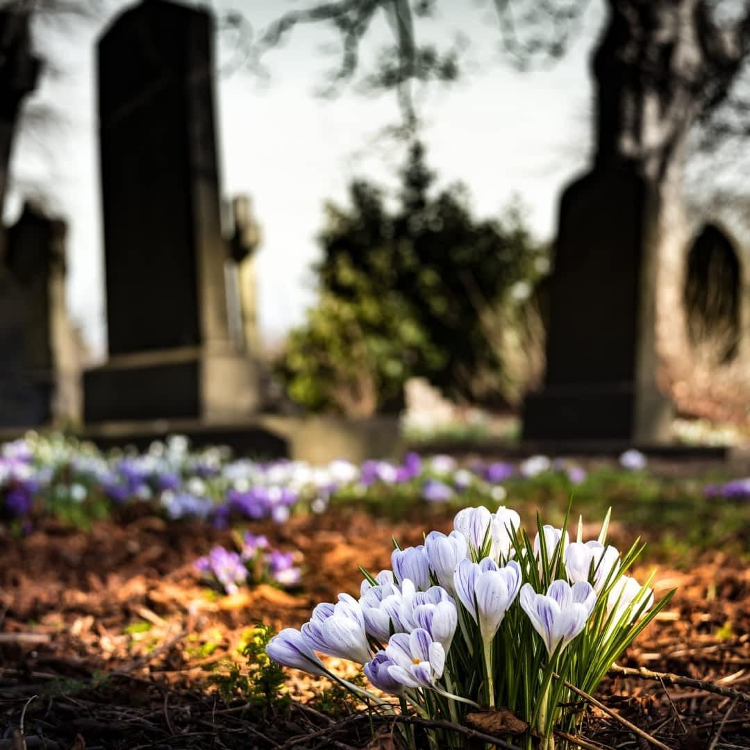 Kwiaty Na Cmentarz Wiosna E Ogrody Sadzenie Roslin