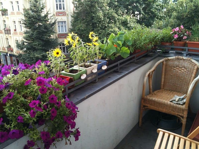 Rosliny Wracaja Z Balkonu E Ogrody Newsletter Artykuly