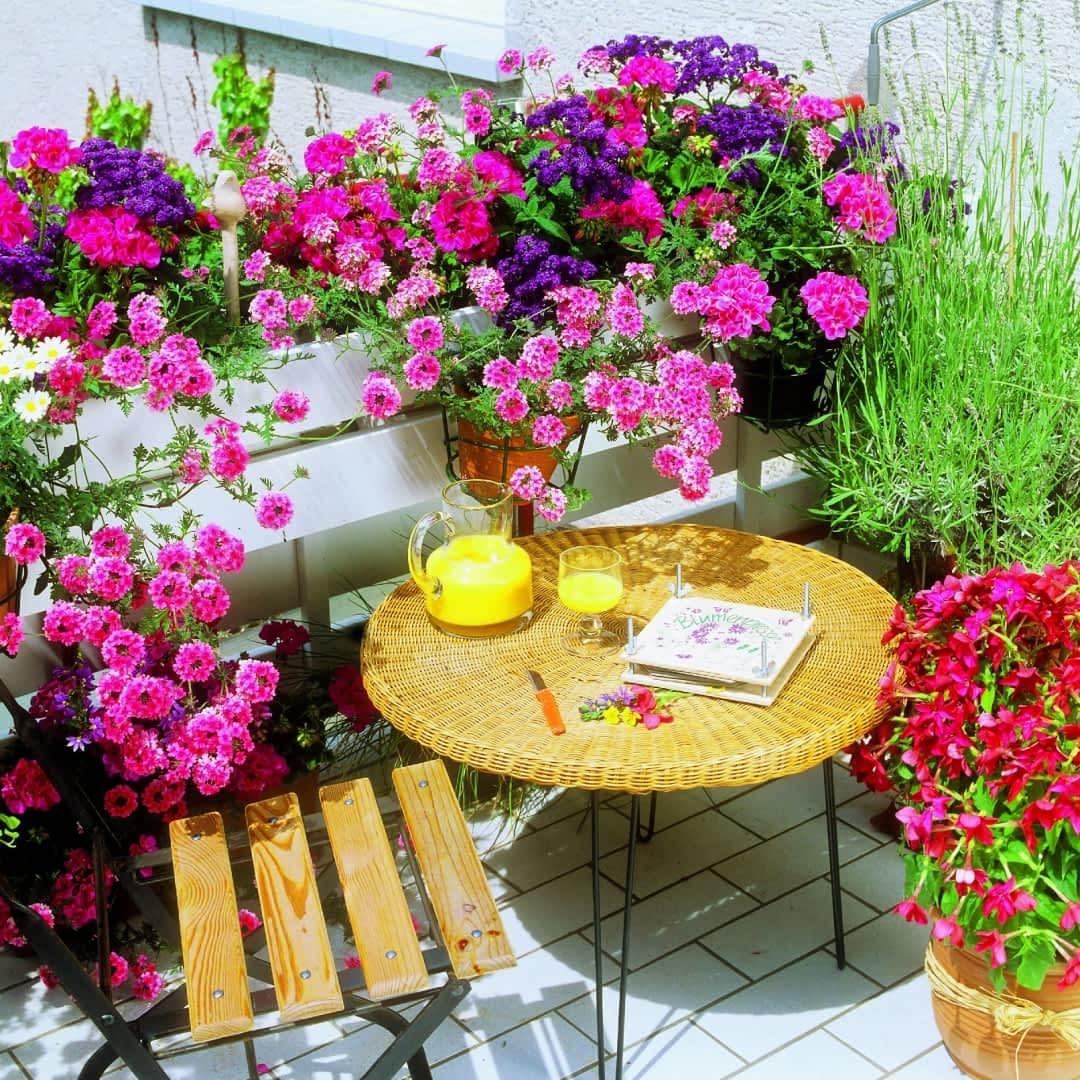 Jadalne Kwiaty Do Dekoracji Ciast Cz Ii Lato