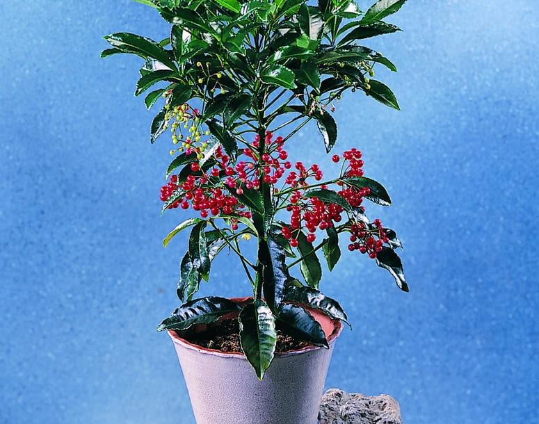 Encyklopedia roślin: