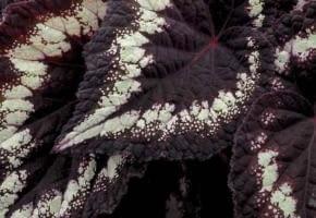 Encyklopedia roślin: Oto mala probka zaprezentowanych w tym roku na swiatowej