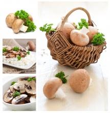 delicious mushrooms