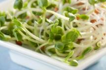 бели кълнове зеленчуци в бяла чиния