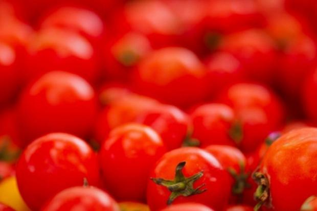 Ла Томатина – бой с домати