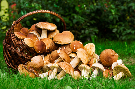 Find out how many calories are there in mushrooms. Calories chart will help you to find out amount of proteins, fats and carbohydrates are in mushrooms.