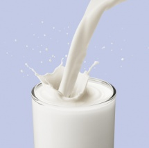 Milk contains large amount of calcium and plays an important role in our diet