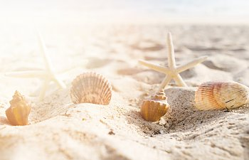 seashells-and-starfish-arranged-on-sand-at-beach_23-2147836795.jpg