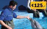 In the water with dolphins - VIP