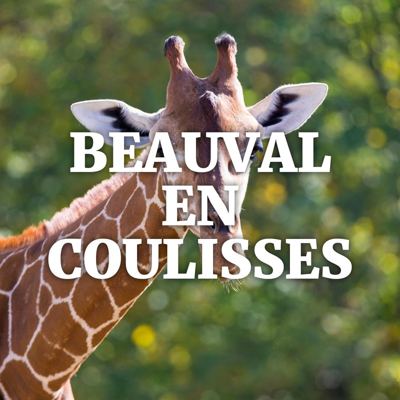 Backstage at Beauval Guided Tour