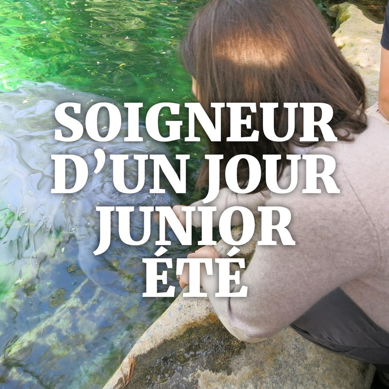 1 Day Junior Animal Keeper Experience Summer