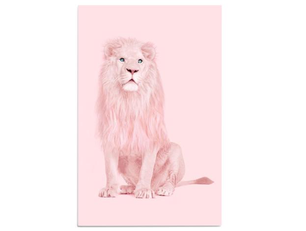 Leinwandbild Albino Lion