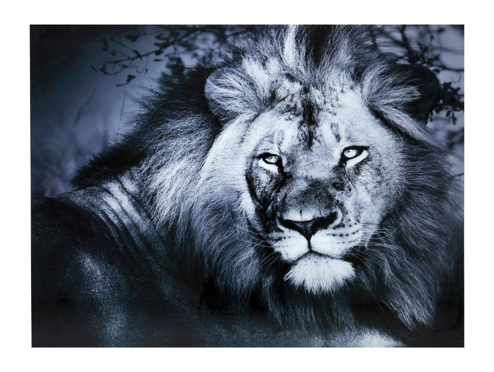 Bild Glas Lion King Lying 120x160cm