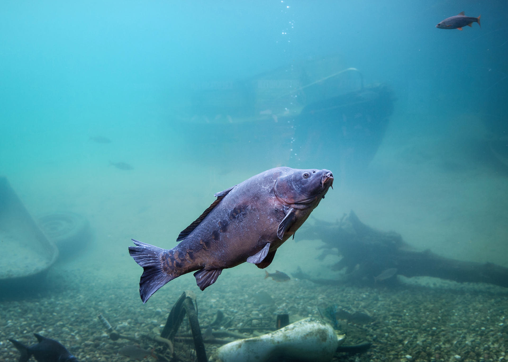 Fisch im Erlebnis-Aquarium Rövershagen