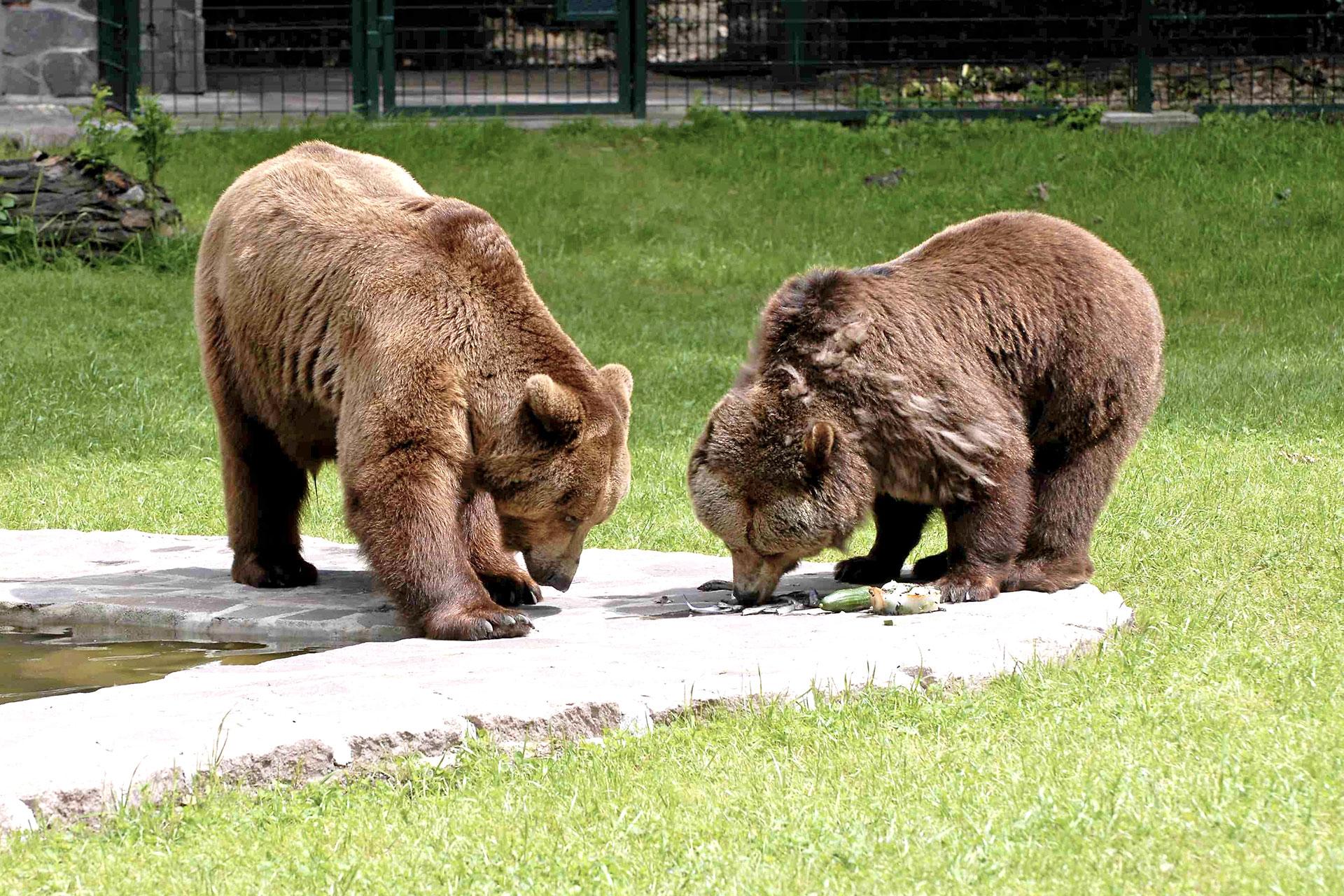 Umgebung Loburg Tierpark Dessau