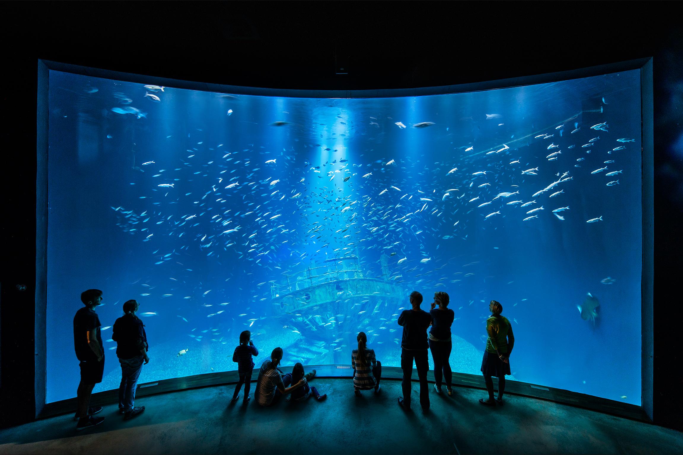 Ozeaneum Karls Freunde