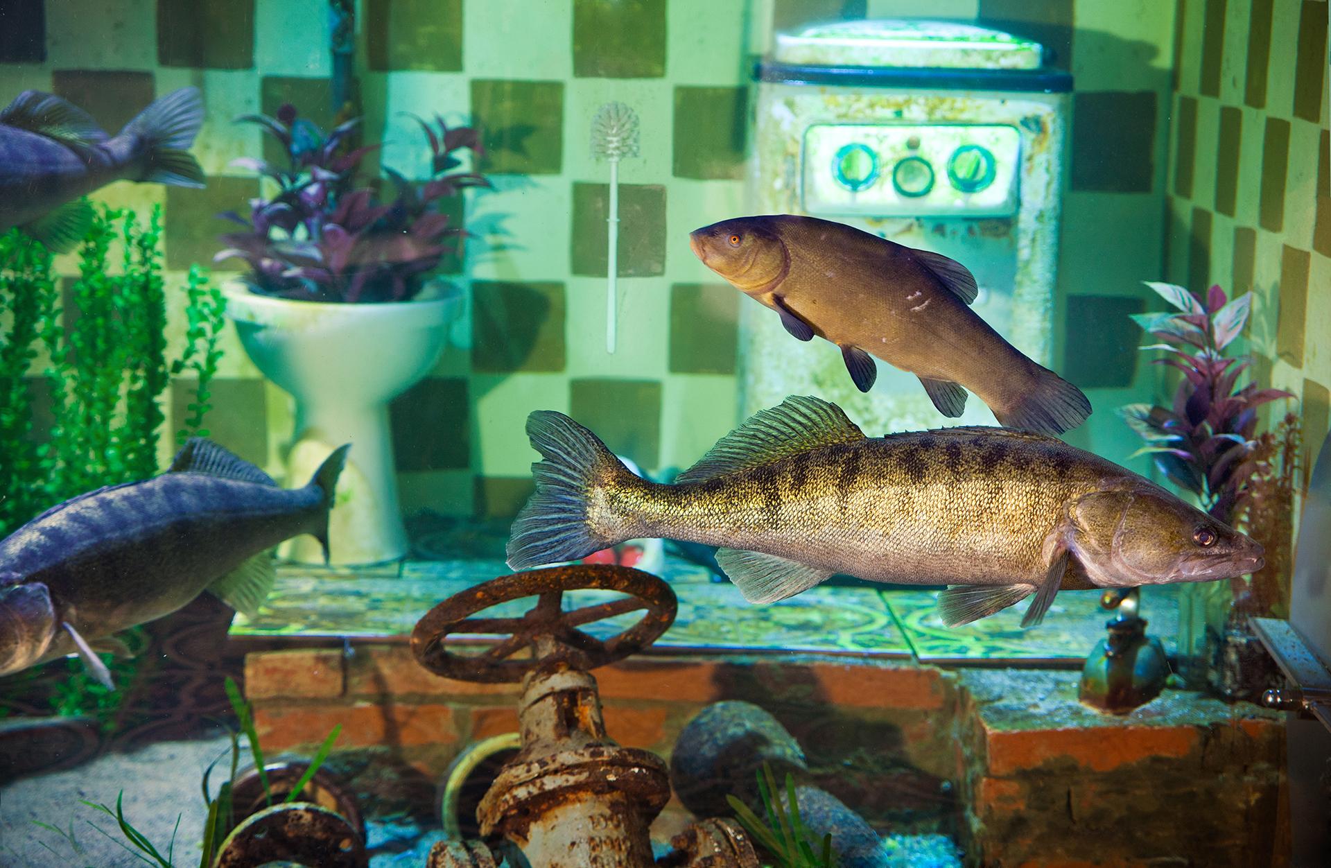 Fische im Erlebnis-Aquarium Rövershagen