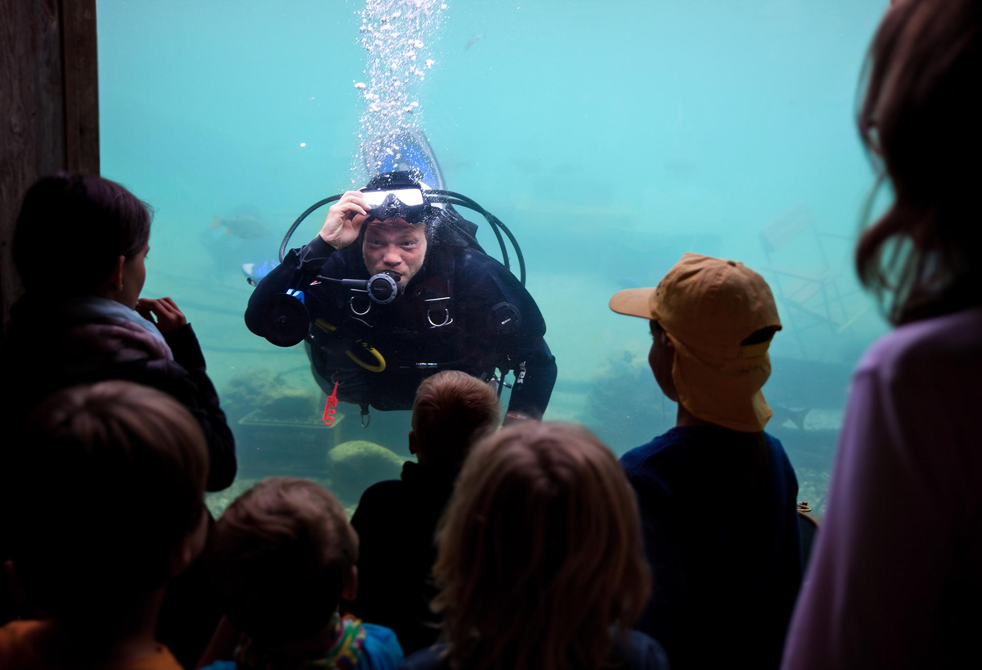 Taucher im Erlebnis-Aquarium Rövershagen