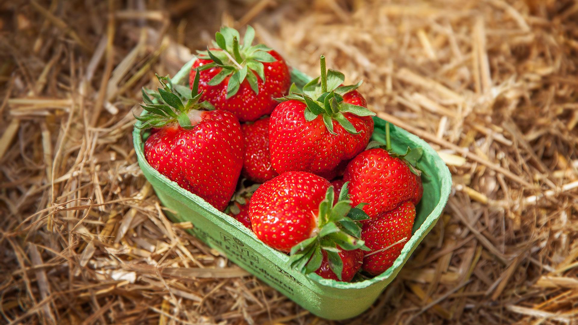 Erdbeeren Erdbeerschale