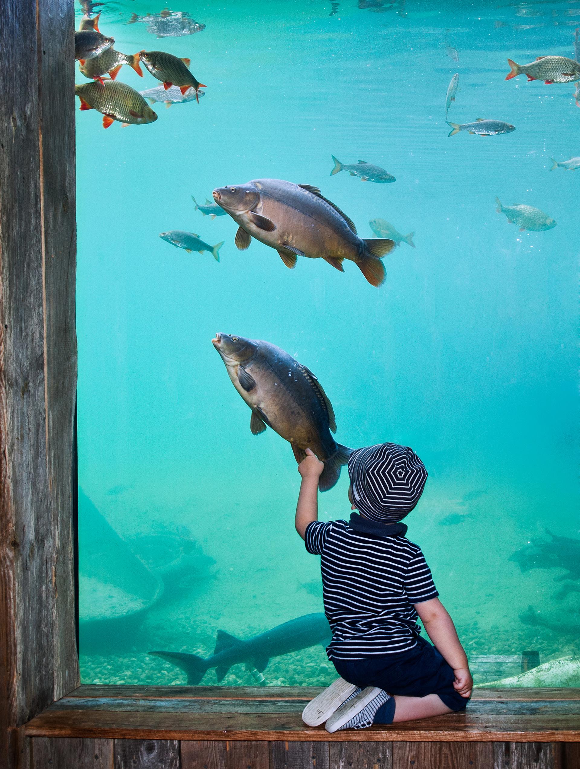 Fische an der Aquariums-Scheibe im Erlebnis-Aquarium Rövershagen