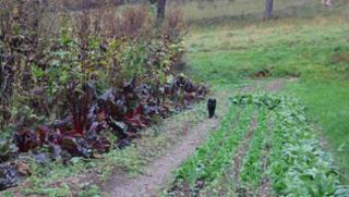 Biohof Wiesent - Gemüse aus dem Ilzer Land in Hutthurm