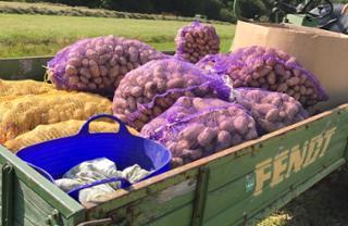 Kartoffeln Kartoffel  von Biohof Wiesent in Hutthurm