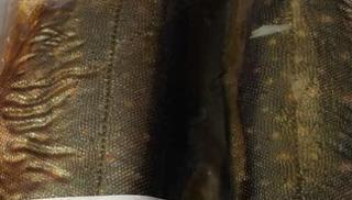 Saiblingsfilet, geräuchert  von Säumerhof Bio-Genusswelt in Grafenau
