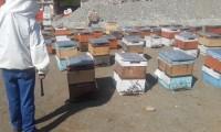Arı Satışlarımız Başlamıştır