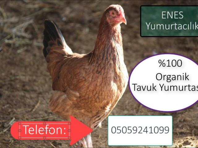 Çumra Enes Organik Yumurta