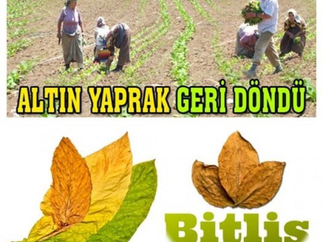 Bitlis Mutki Tütün Koruma Derneği 0555 193 34 06