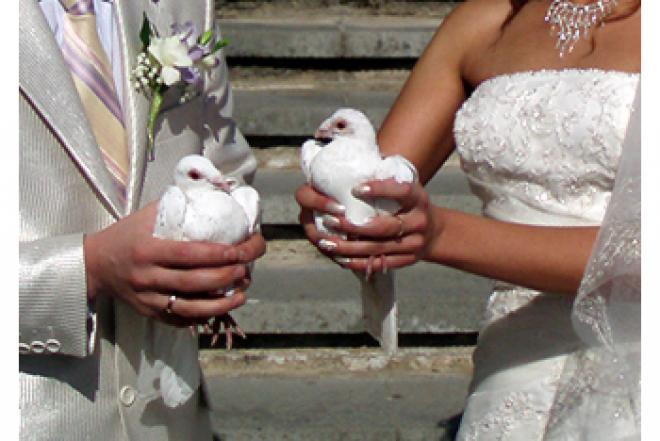 Balti balandžiai-meilės ir ištikimybės simbolis-0