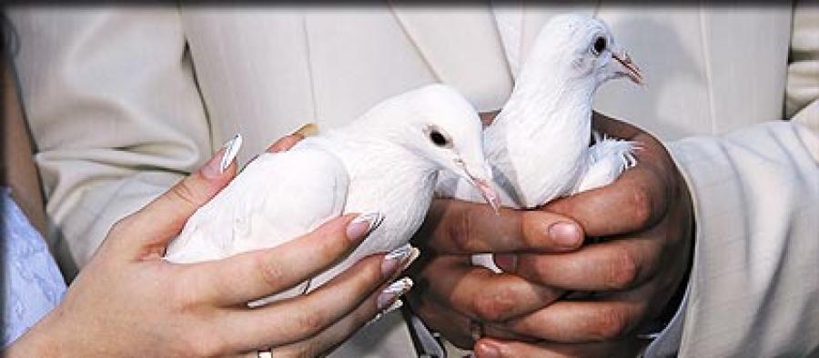 Balti balandžiai-meilės ir ištikimybės simbolis-4