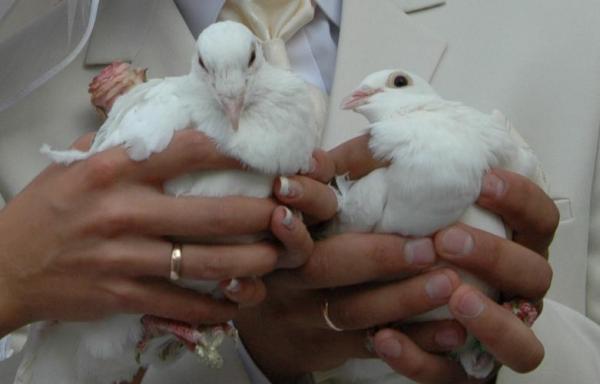 Balti balandžiai-meilės ir ištikimybės simbolis-2