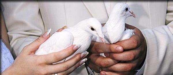 Balti balandžiai-meilės ir ištikimybės simbolis-3