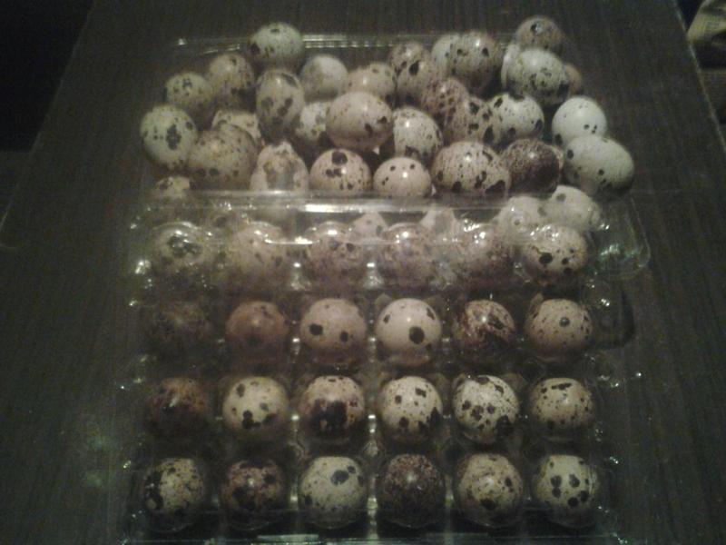 Putpelių kiaušiniai-0