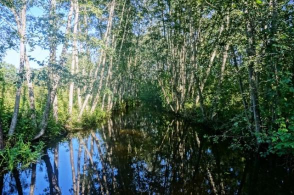 1,37 ha sklypas Kulinių vs. Utenos r.v -3