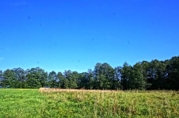1,37 ha sklypas Kulinių vs. Utenos r.v -6