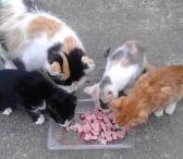 5 kačiukai ieško namų-0