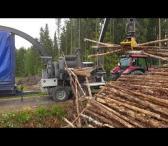 Frezuojame kelmus, žemę. Iškertame ir superkame medieną, krūmus, kirtimo atliekas. Smulkiname medieną biokurui.-0