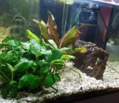 Parduodamas akvariumas su iramga, gruntu ir zuvytemis-0