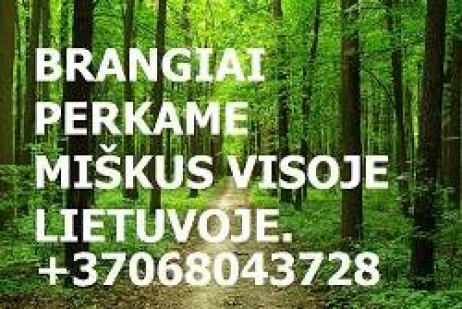 Stambi Įmone Brangiai Perką Miškus Visoje Lietuvoje-0