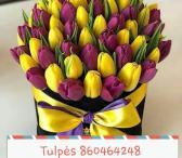 Tulpės pigiau urmu ir mažmena-0