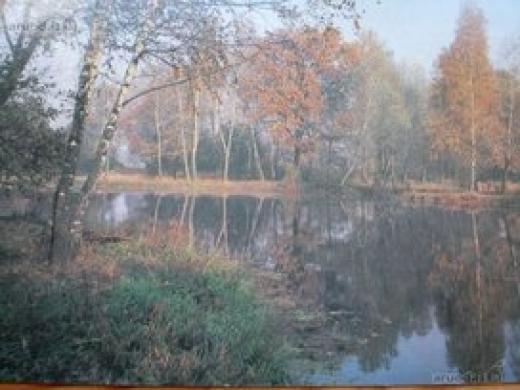 Parduodamas 153a sklypas Vilniaus rajone, netoli ežero -1