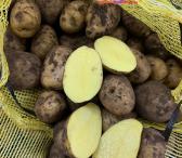Parduodam dideles maistines Bulvės-0