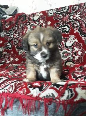 Dovanojame mielą šuniuką -0