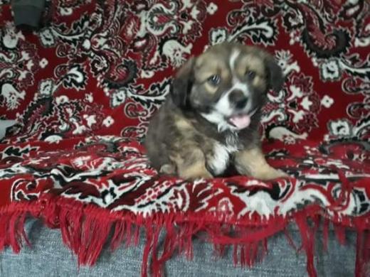 Dovanojame mielą šuniuką -2